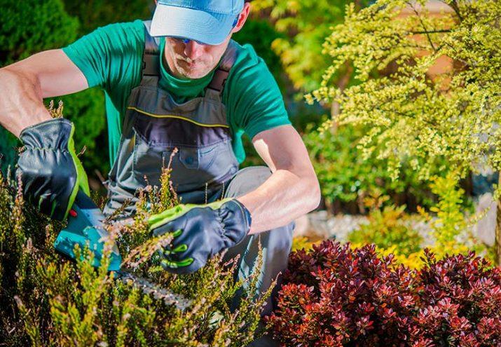jardineria estudiar