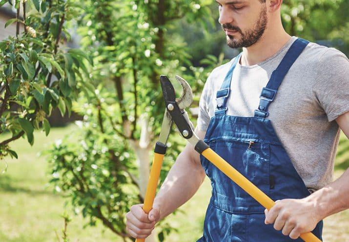 jardineria historia