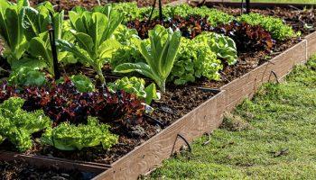 Técnicas de cultivo en la agricultura ecológica: ¿cuáles son?