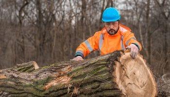 Guarda Forestal sueldo: ¿cuál es su salario?