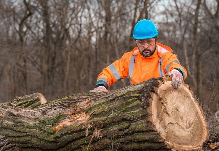 sueldo guardia forestal